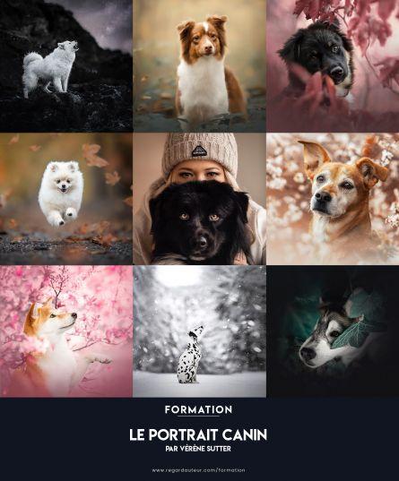 Le portrait canin