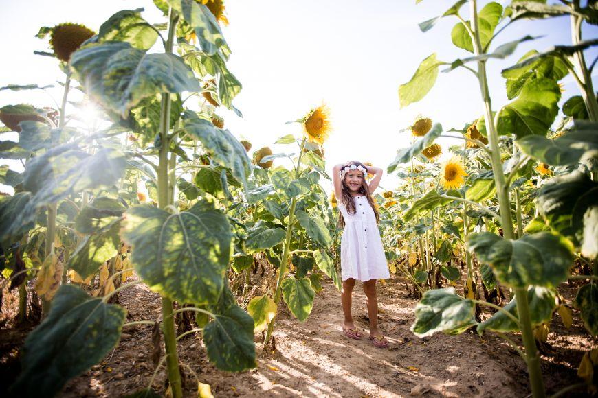 Jeune fille en robe blanche avec une couronne de fleurs jouant dans un champ de tournesol ! Photo @Laurence Senecharles Trouver votre photographe sur www.regardauteur.com    #enfant #fille #champ #tournesols #shooting #extérieur #couronne #fleurs #portrait #photographe photographie #regardauteur