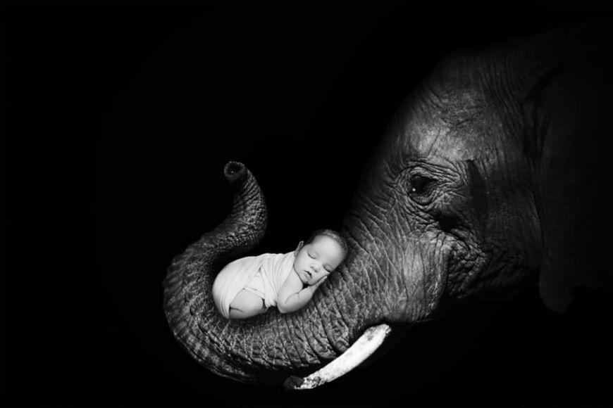 photographe bébé éléphant noir et blanc