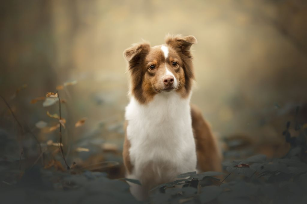 Portrait canin en action | formation photo canine 3