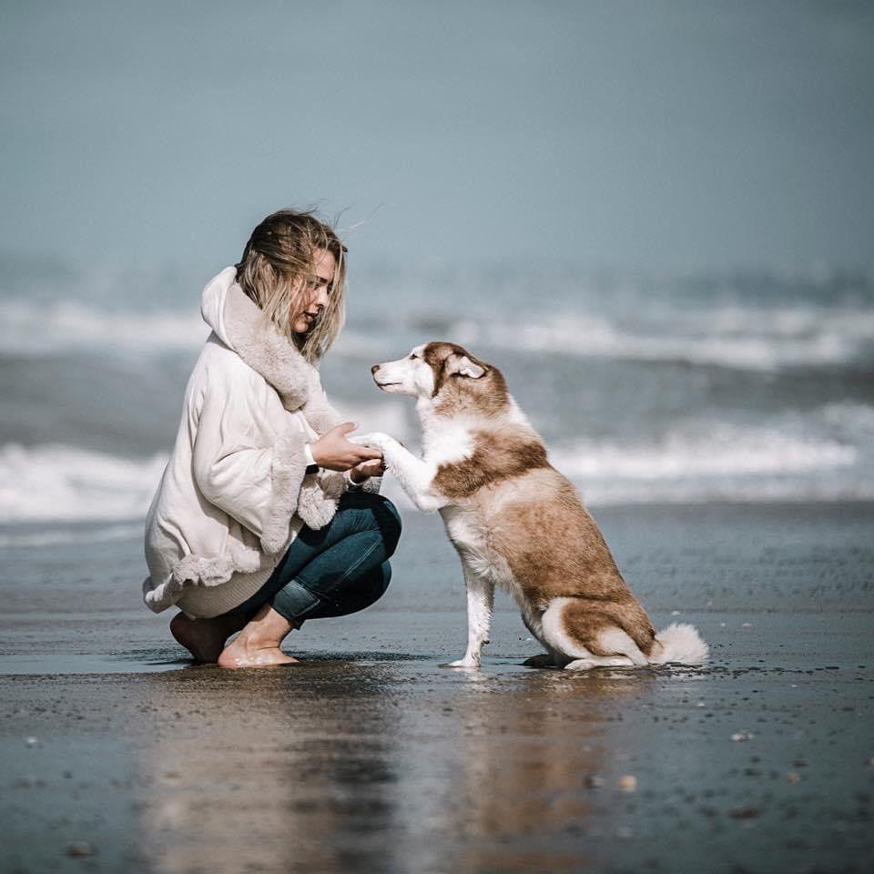 formation portrait canin photo chien par Verene Sutter 4