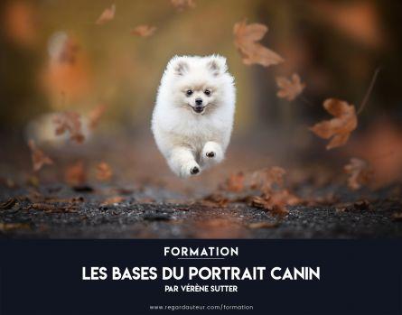 Formation à distance | Les bases du portrait canin